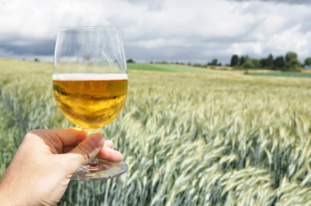 Glass of beer in the hand against barley ears Imagens