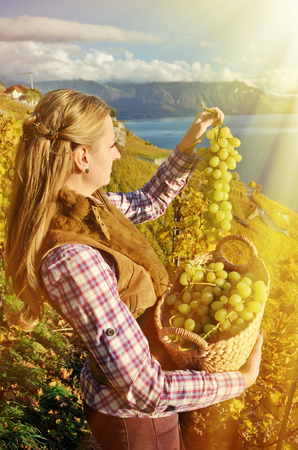 basketry: Girl with a basket full of grapes. Lavaux region, Switzerland Stock Photo