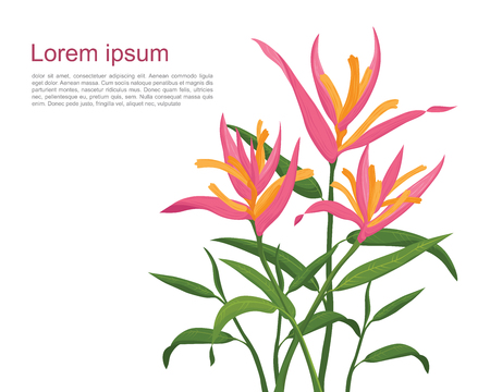 Bird of Paradise flowers (Pink) Illustration