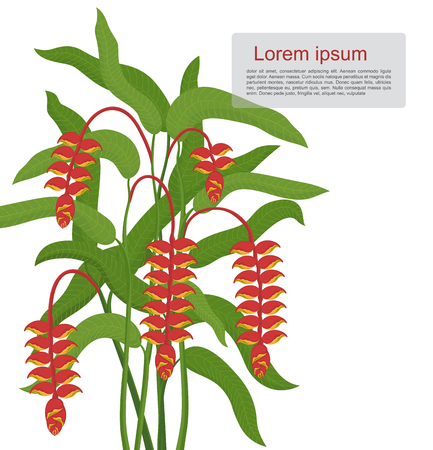 tropical: Tropical flower - Heliconia Illustration