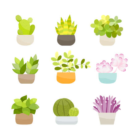 Collection of small green bushes, potted plants. Vector Illustration.