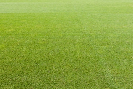 Carefully maintained empty green lawn background of a sports field or stadium