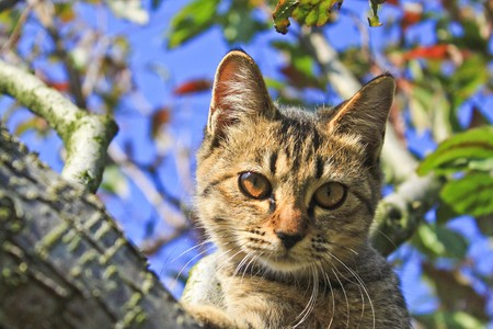 A kitty on the apple tree Stock Photo - 7044186