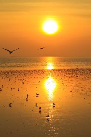 Seagull on sunset background photo