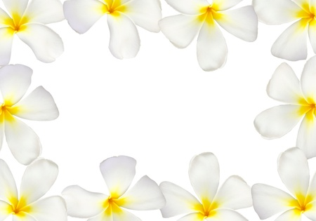 Frangipani flower frame isolated photo