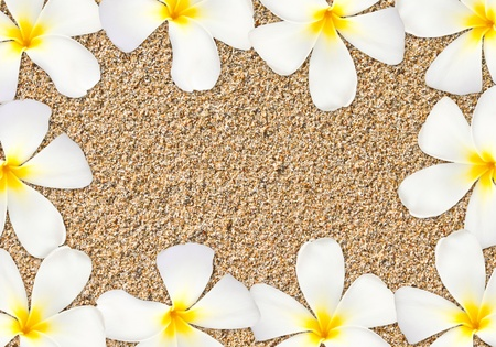 Frangipani flower frame on sand photo