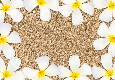 Frangipani flower frame on sand photo