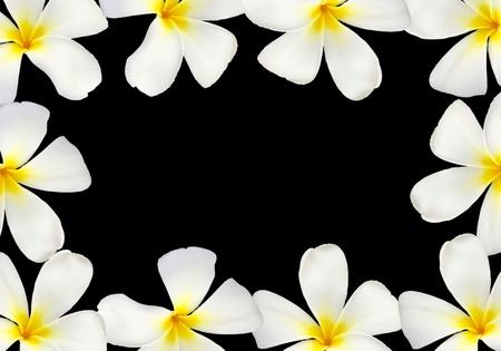 Frangipani flower frame isolated on black background photo