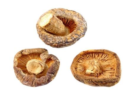 shiitake: Dry Shiitake Mushroom isolated on white