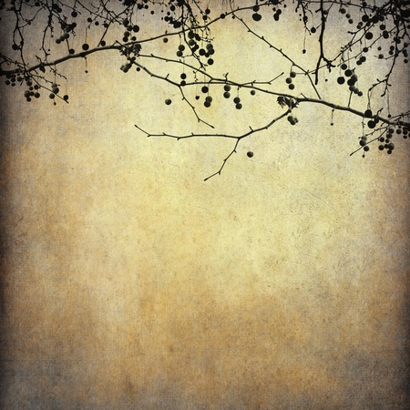 Grunge paper background with dried tree shape photo