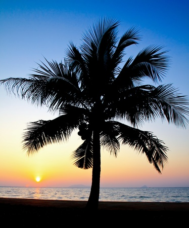 Coconut palm tree silhouetted against sky at sunrise