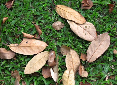 dried leaf: dry leaves on green grass Stock Photo
