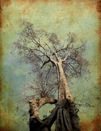 tall tree: Grunge image of dried tree