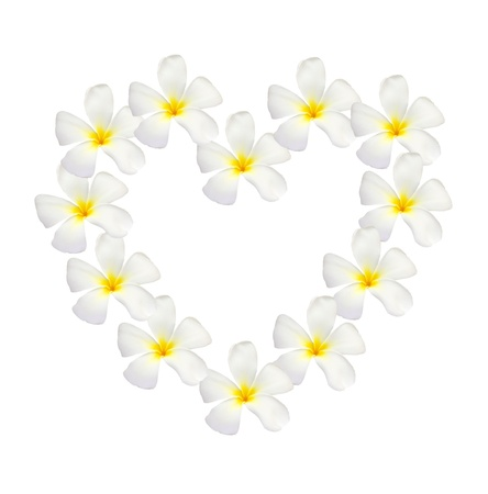 frangipani shape as heart isolated on white photo