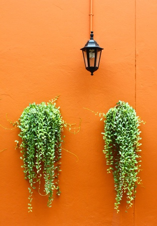 old lamp with green plants on orange wall photo