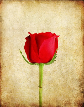 red book: Red rose on old grunge paper background  Stock Photo