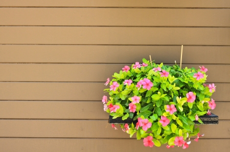 Hanging flower on wood wall photo