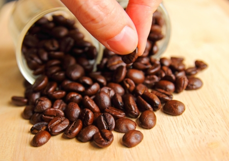 hand holding coffee bean photo