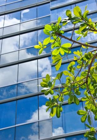 Árbol con el moderno edificio de oficinas y la reflexión del cielo azul
