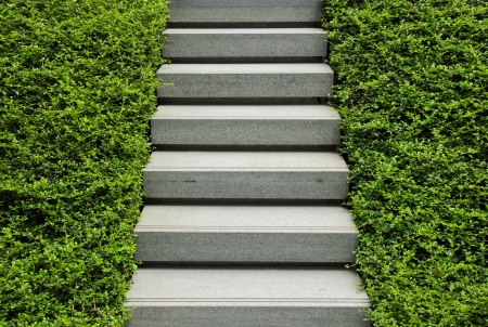 Stairway with green plant photo