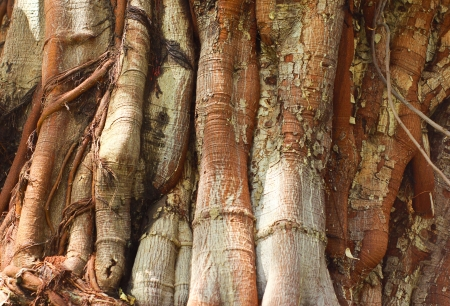 Closeup of tree trunk texture photo