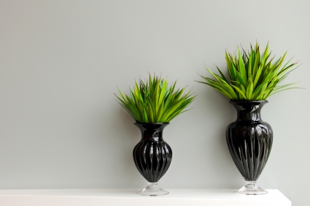 Green plant in black vase decorated for room Stock Photo - 15495785