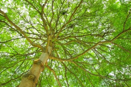 directly below: Below a huge leafy tree Stock Photo