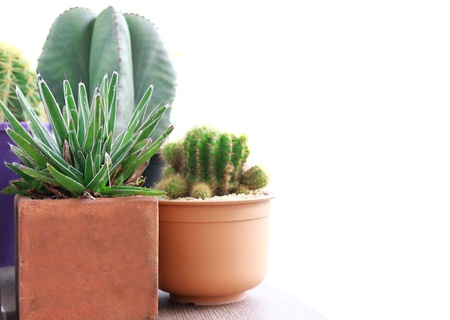 potted plant cactus: various of cactus on white background