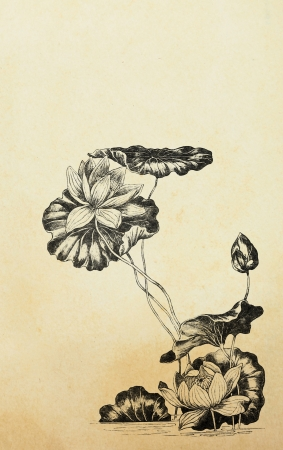 Lotus flowers in art nouveau style on old paper photo