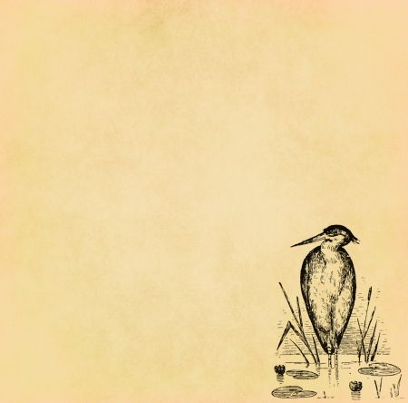 ancient bird: Illustration of bird on old paper with copy space