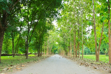 Road through row of green trees photo