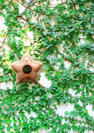 Old star hanging for decorated on ivy wall photo
