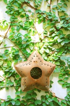 wall ivy: Star Antiguo colgante de pared decorado en hiedra