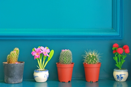 cactus flower: Small cactus with flower decorated on green wall