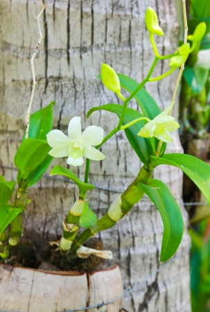 white orchids in tropical garden photo