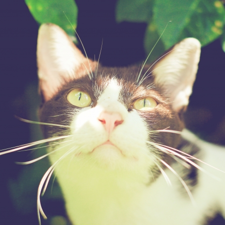 Close up of cute cat in garden with retro filter effect photo
