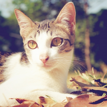 cute cat lying on grass in the garden with retro filter effect photo