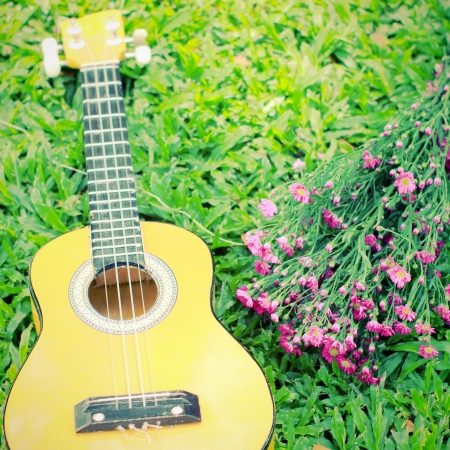 acoustic ukulele: Ukulele guitar on green grass with flower