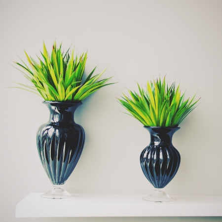 Plant in black vase decorated for room, retro filter effect photo