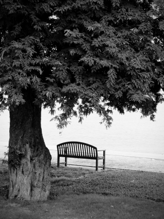 park bench: Lonely park bench in black and white