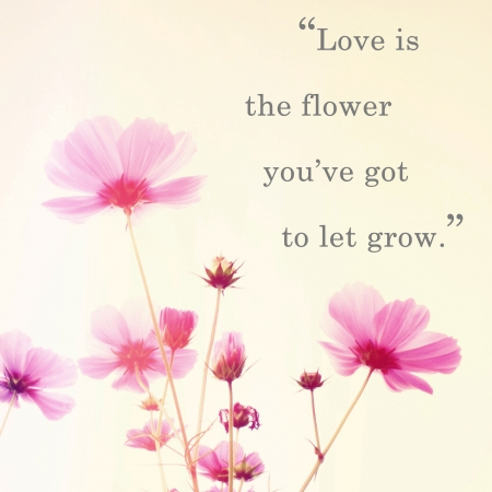 Inspirational quote word by John Lennon and pink blossom flowers with retro filter effect