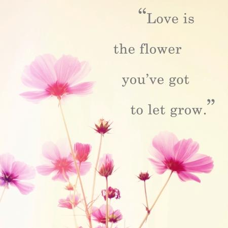 Inspirujący cytat słowa Johna Lennona i różowy kwiat kwiaty z efektem filtru retro