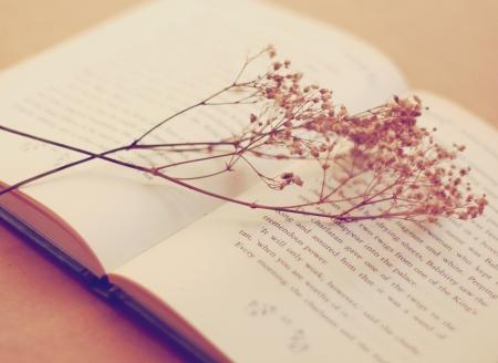 Livro velho com flores secas, efeito de filtro retro