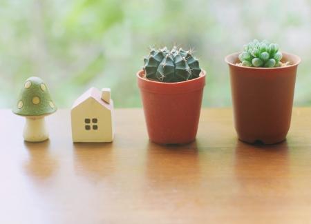 Cactus met kleine huis en paddestoel voor ingericht Stockfoto