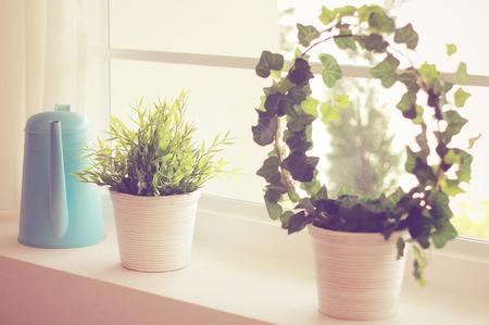 regar las plantas: Planta decorada y regadera con efecto retro filtro