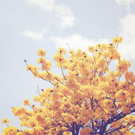 レトロなフィルター効果を持つツリーの上部にある黄色の花 写真素材