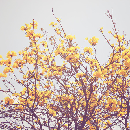Yellow flower on the top of tree with retro filter effect  photo