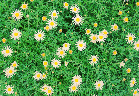 new filter: Daisy flowers background with retro filter effect