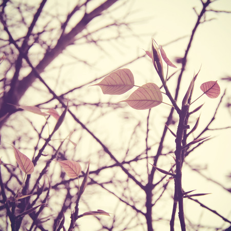 natural  moody: Dried tree and leaf with retro filter effect