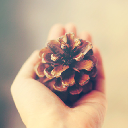 Hand holding pine cone with retro filter effect photo